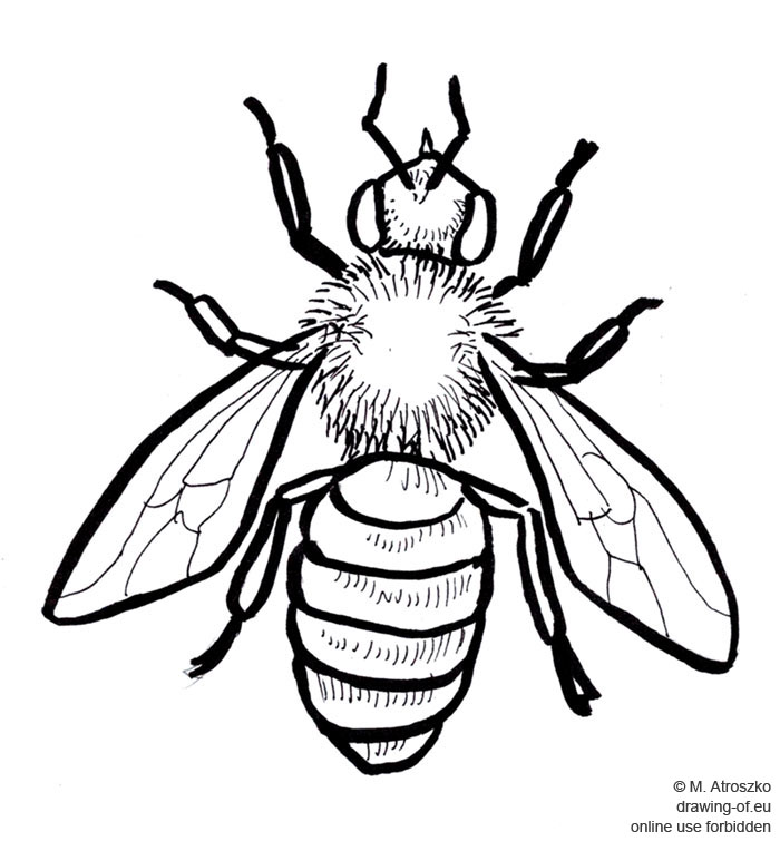 abeja dibujo