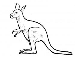 Dibujo del canguro