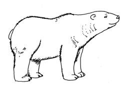 dibujo-oso-polar