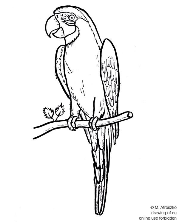 Dibujo del papagayo