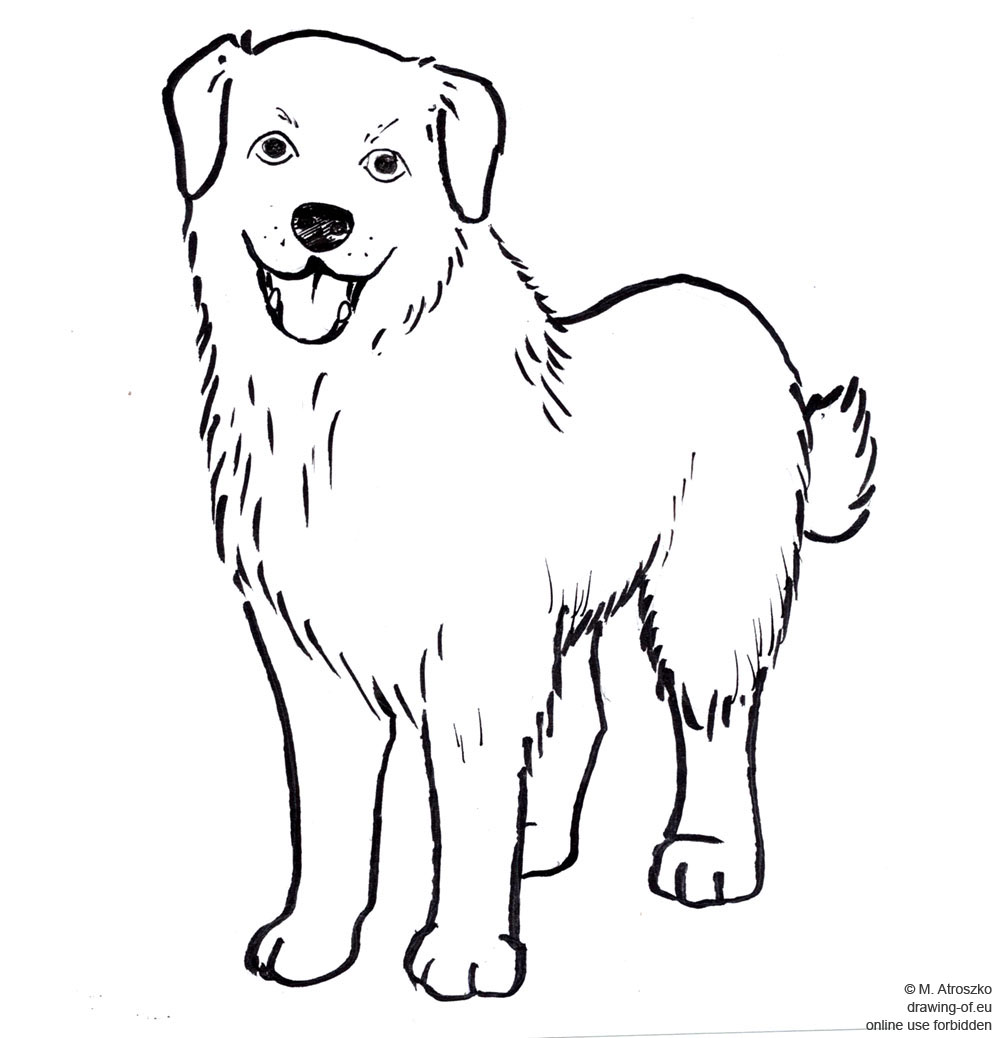 Pies - rysunek