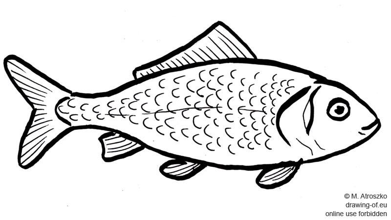 pez dibujo