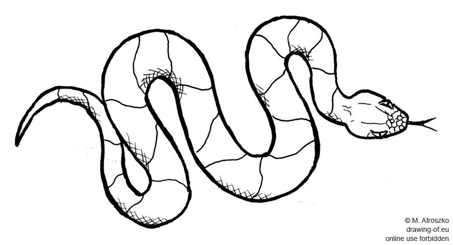 Dibujos De Serpientes Para Colorear E Imprimir: Serpiente Dibujo : Dibujos