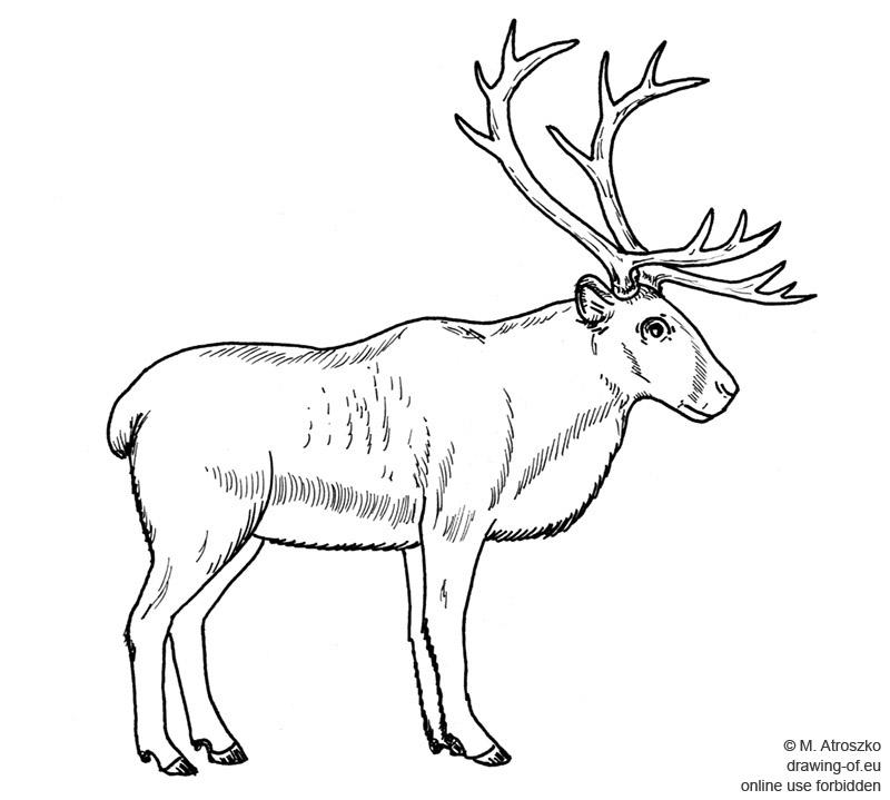 Dibujo del reno
