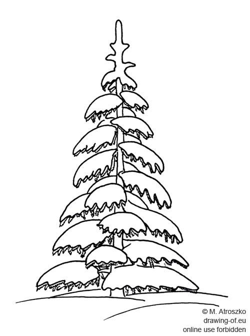 Picea y nieve