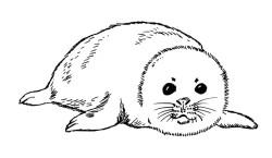 dibujo de la foca