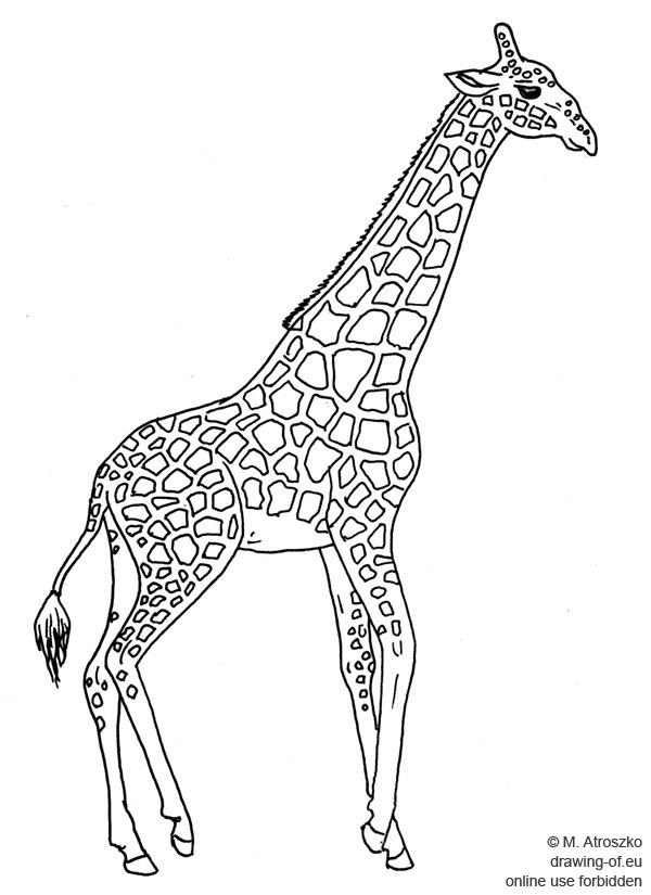 dibujo de jirafa
