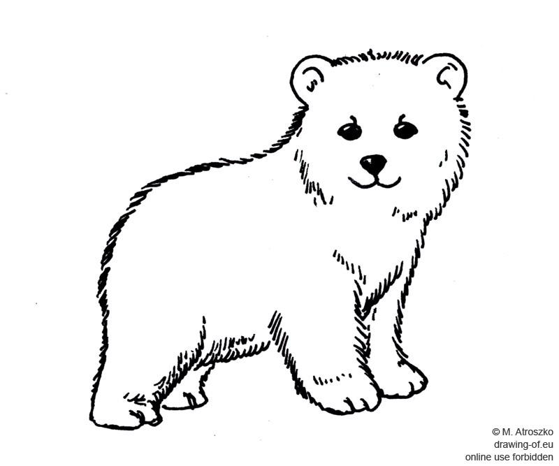 joven oso dibujo