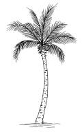 dibujo de la palma