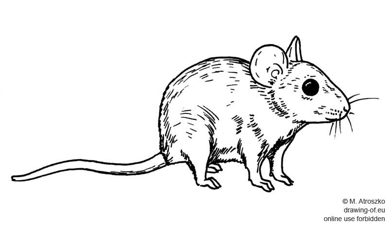 Ratón dibujo