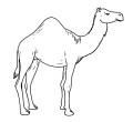 dibujo camello