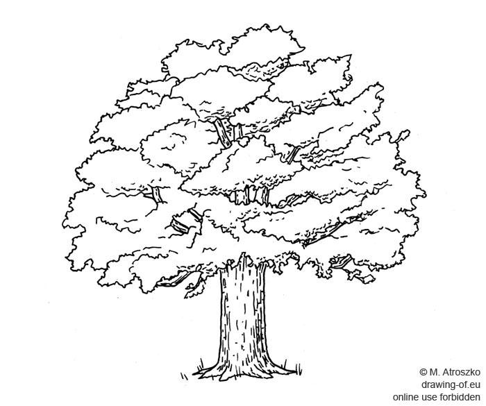 arbol dibujo