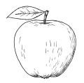 manzana dibujo