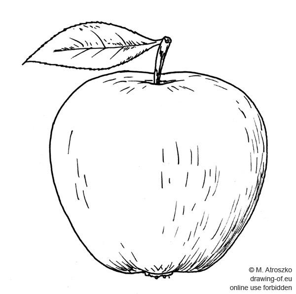 manzana-dibujo