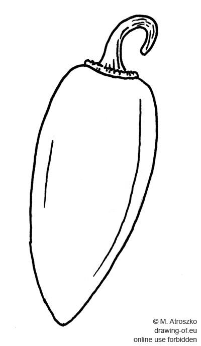 paprika dibujo