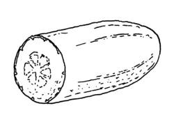 pepino dibujo