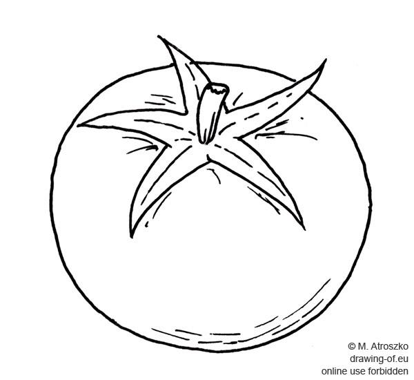 tomate dibujo