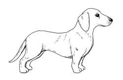 dibujo del perro