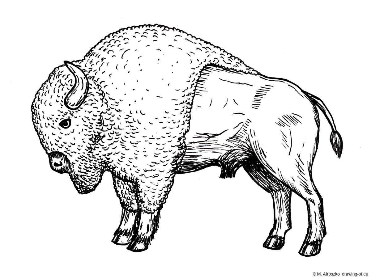 bisonte dibujo