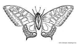 dibujo de mariposa