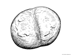 Dibujo del bollo