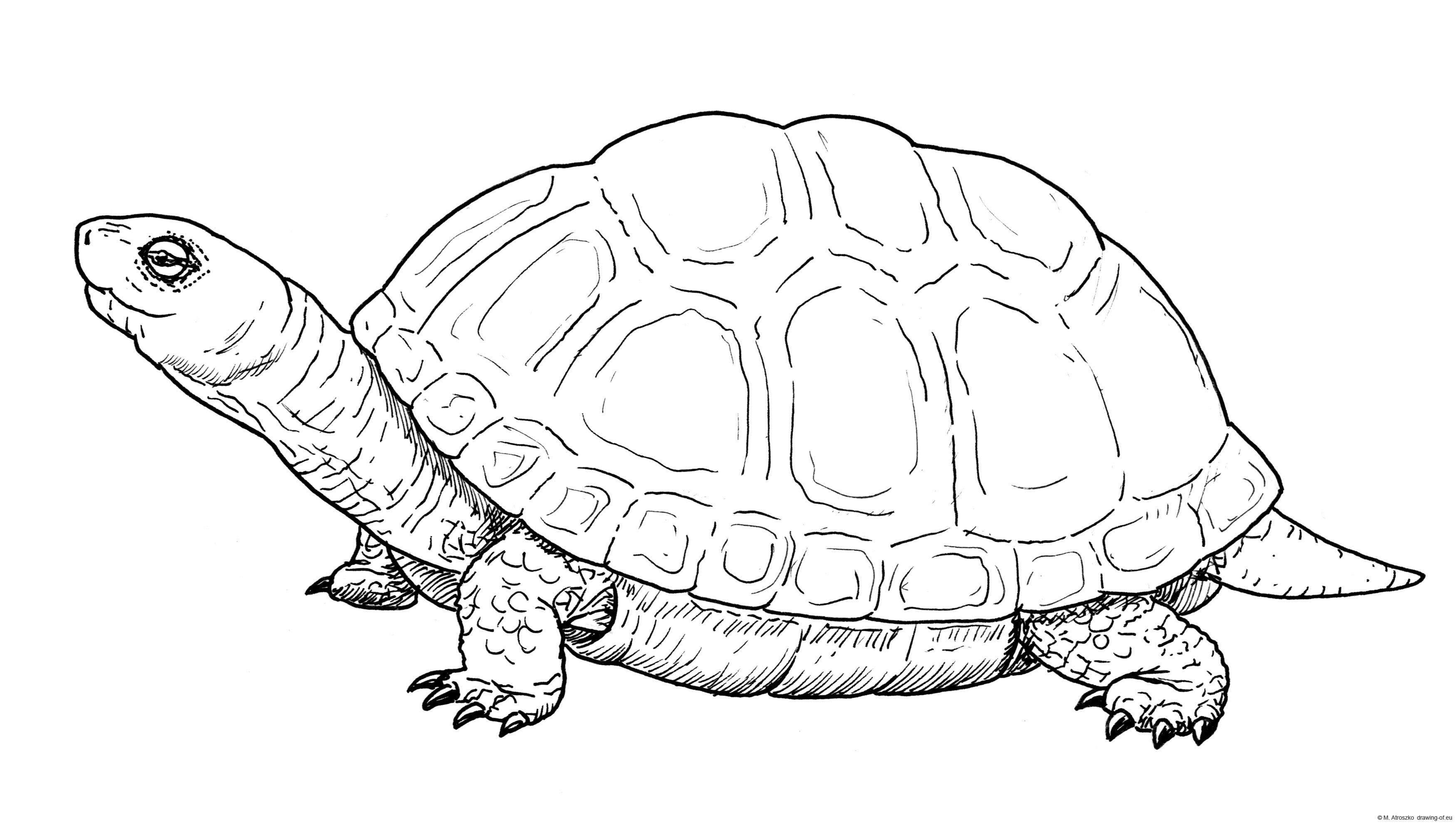 Dibujo de tortuga
