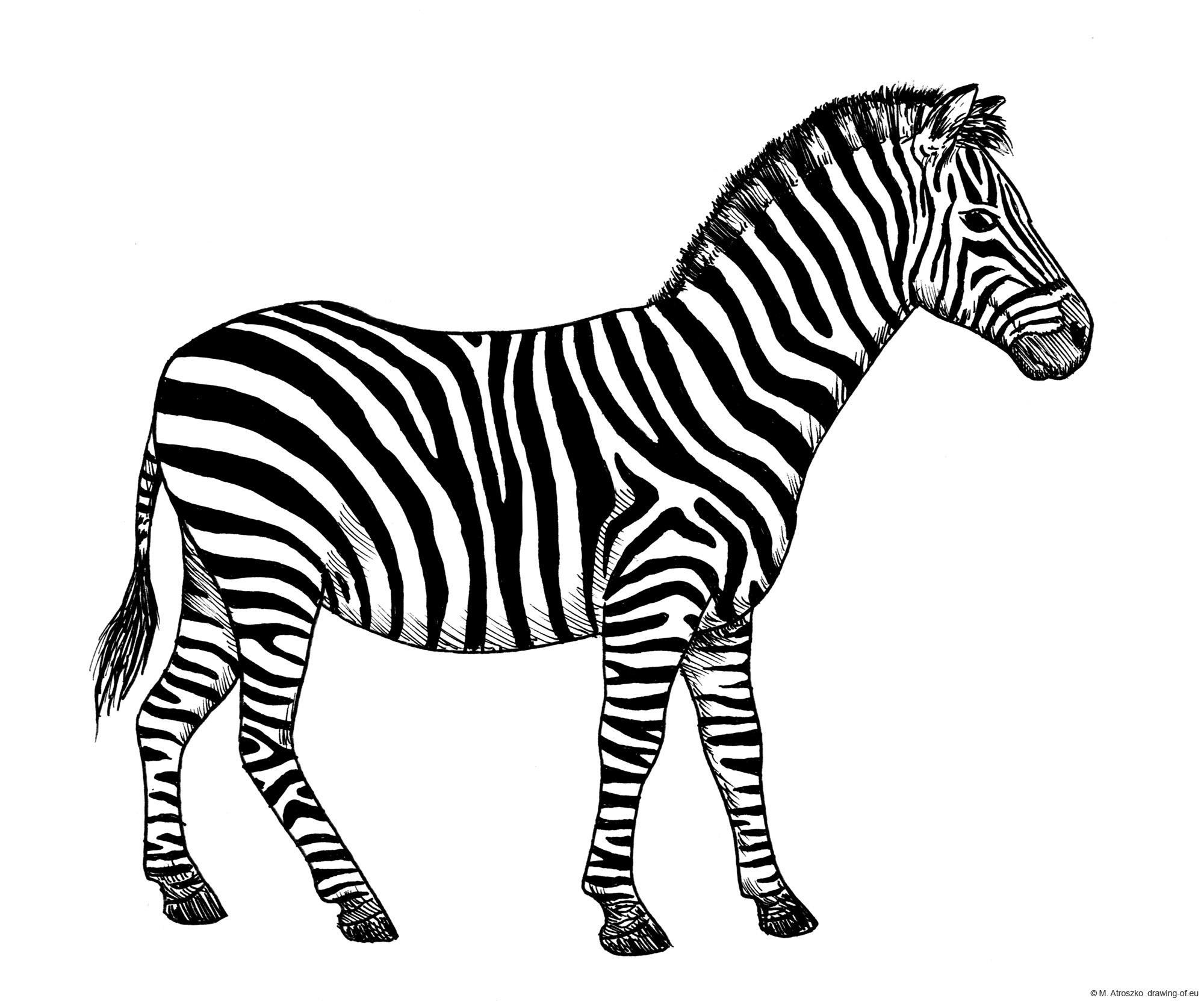 Dibujo de zebra