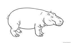 Dibujo de hippo