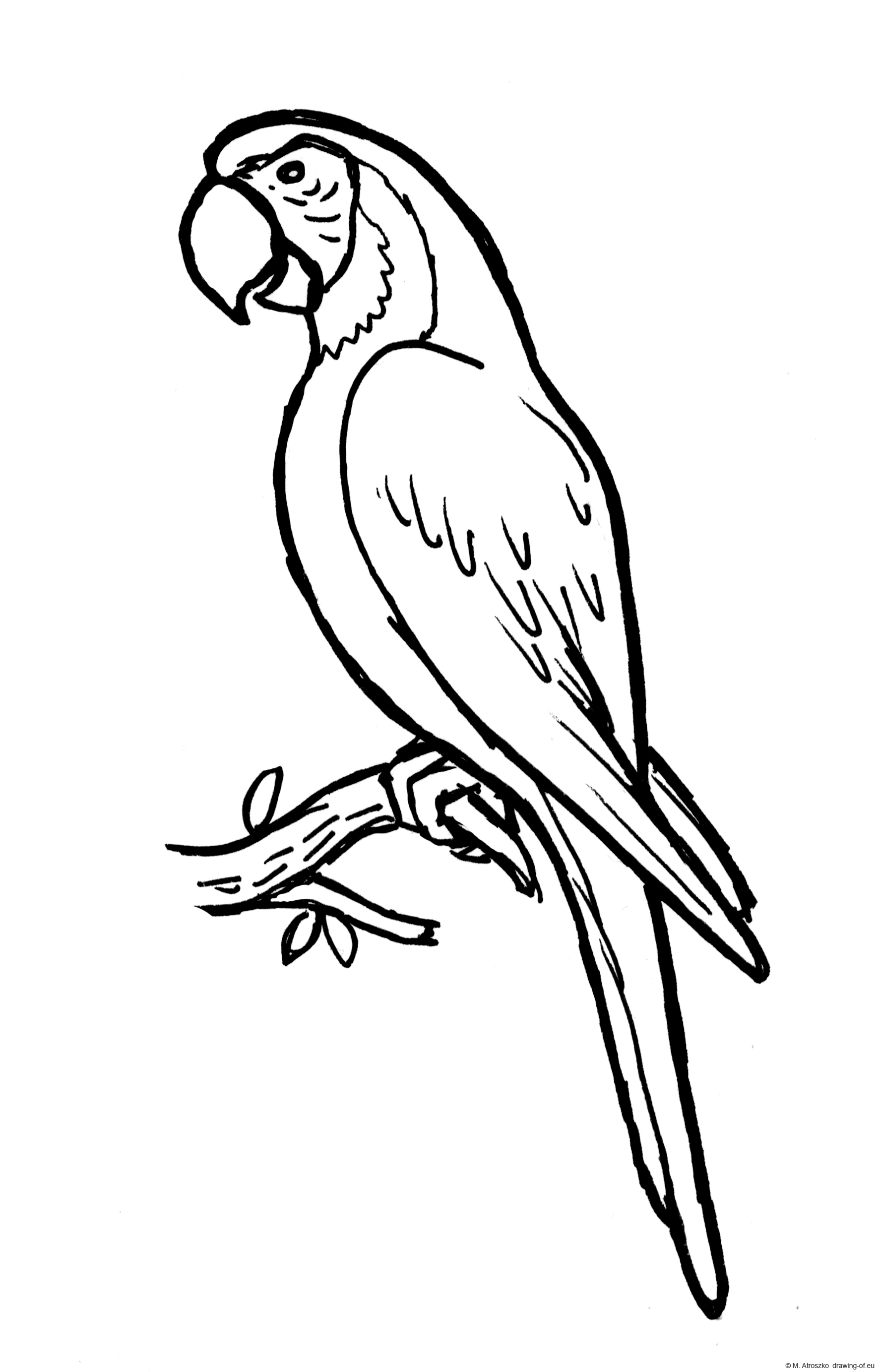 dibujo de guacamayo azulamarillo