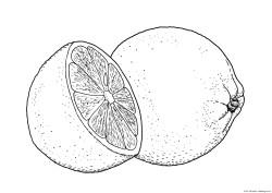 Dibujo de naranja